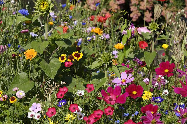 Flowers, Wildflowers, Flower Meadow, Bees, Mallow