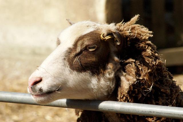 Animal, Farm, Nature, Agriculture, Mammal