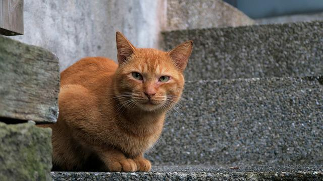 Animal, Cute, Cat, Mammal