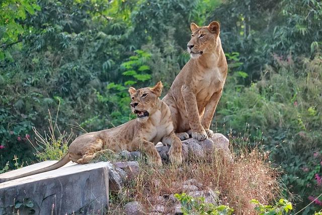 Nature, Wildlife, Mammal, Animal, Cat, Carnivore, Wild