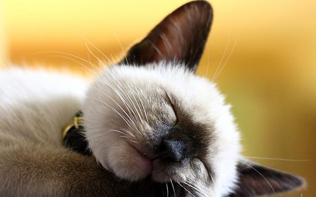 Animal, Mammal, Cute, Cat, Fur, Pets