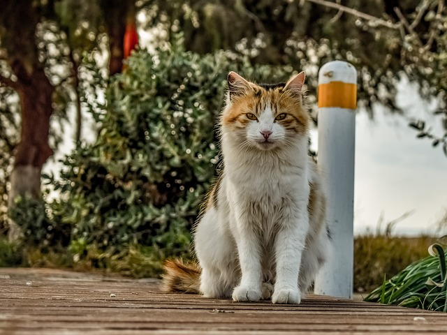 Animal, Cat, Stray, Nature, Cute, Mammal, Outdoors