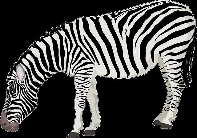 Zebra, Animal, Mammal, Black, White, Stripes, Standing