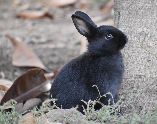 Wildlife, Animal, Mammal, Cute, Outdoors, Bunny