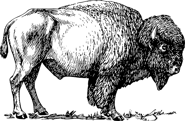 Bison, Buffalo, Animal, Mammal, Wild, American