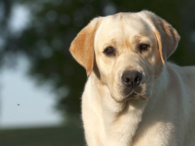 Dog, Pet, Cute, Mammal, Canine