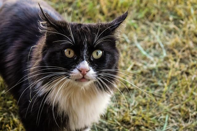 Cat, Feral, Feline, Animal, Mammal, Looking, Nature