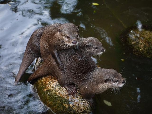 Otter, Mammal, Clawed Otter, Friends, Family, Snuggle