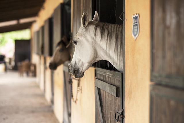 Horse, Animal, Portrait, Ride, Nature, Cute, Mammal