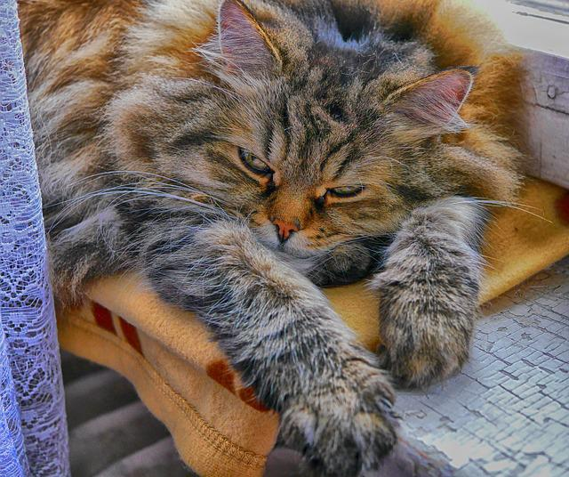 Cat, Kitten, Pet, Mammal, Cute, Tiger Cat, Thoroughbred