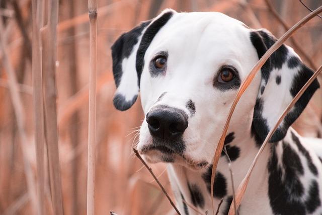 Animal, Mammal, Dog, Portrait, Pet