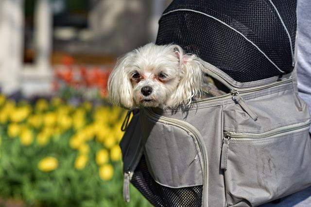 Little Dog, Dog, Animal, Mammal, Canine, Pet, Domestic