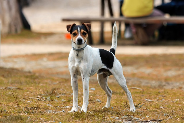 Dog, Animal, Pet, Cute, Canine, Mammal, Lawn, Outdoor