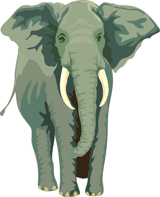 Elephant, Animal, Mammal, Trunk, Tusks, Wildlife