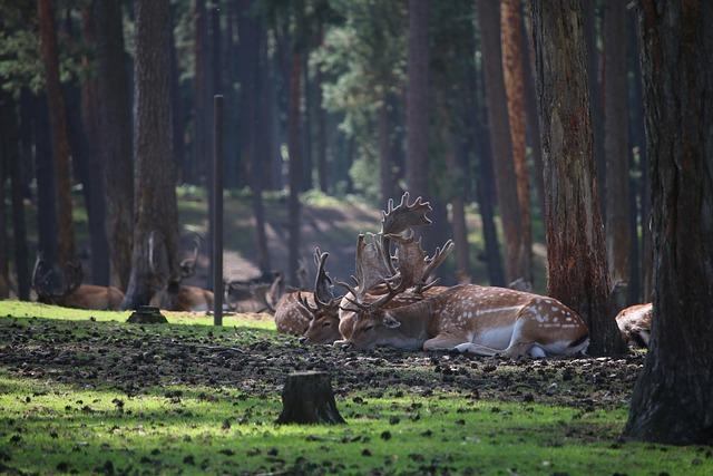 Red Deer, Forest, Roe Deer, Fawn, Bambi, Mammal