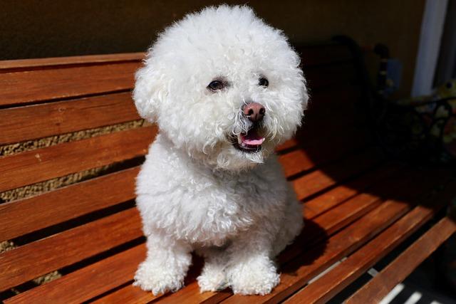 Dog, White, Animal, Mammal, Cute, Puppy, Fur, Furry