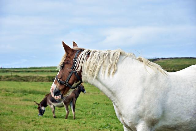 Mammal, Farm, Grass, Cavalry