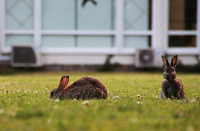 Rabbit, Wild Rabbit, Head, Hare, Mammal, Grass, Cute