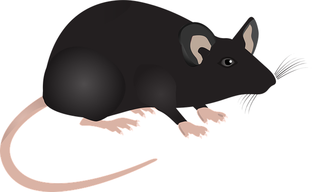 Lab Mouse, Mouse, Science, Lab, Animal, Mammal, Mice