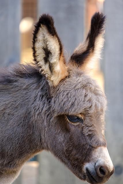 Donkey, Horse, Baby, Young Animal, Mammal, Livestock