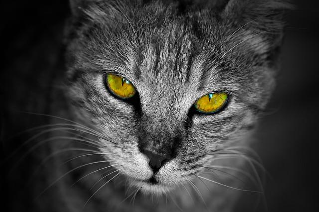 Cat, Portrait, Staring, Mammal, Animal, Cute, Looking