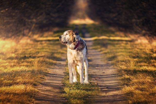 Dog, Nature, Mammal, Animal, Mastin
