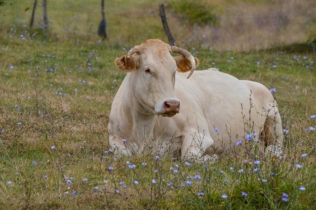 Grass, Mammal, Field, Hayfield, Animal, Nature, Cow