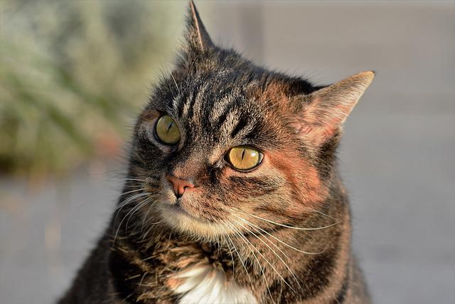 Cat, Mackerel, Animal, Cute, Mammal, Nature, Fur