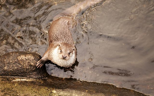 Otter, Animal, Cute, Nature, Wild, Wildlife, Mammal