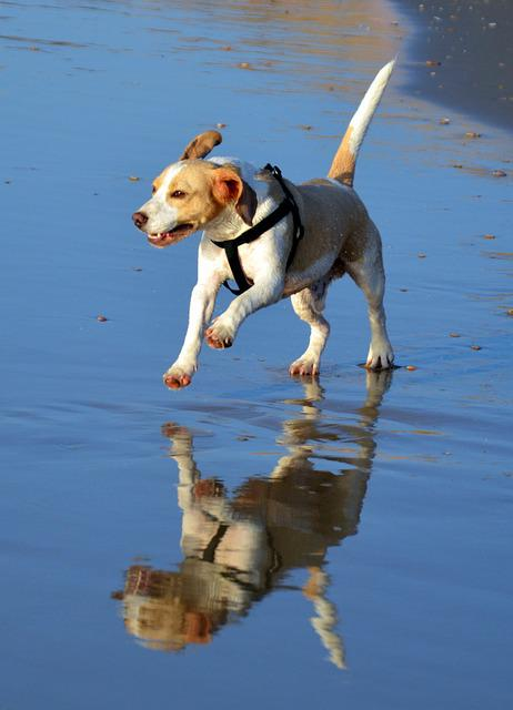 Water, Outdoors, Animal, Nature, Mammal, Dog, Fun, Cute