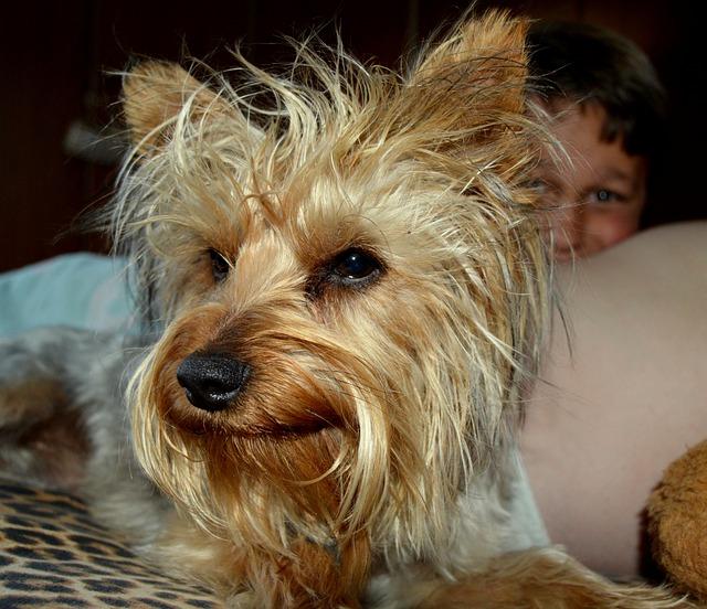 Dog, Pet, Animal, Canine, Mammal, Terrier, Cute