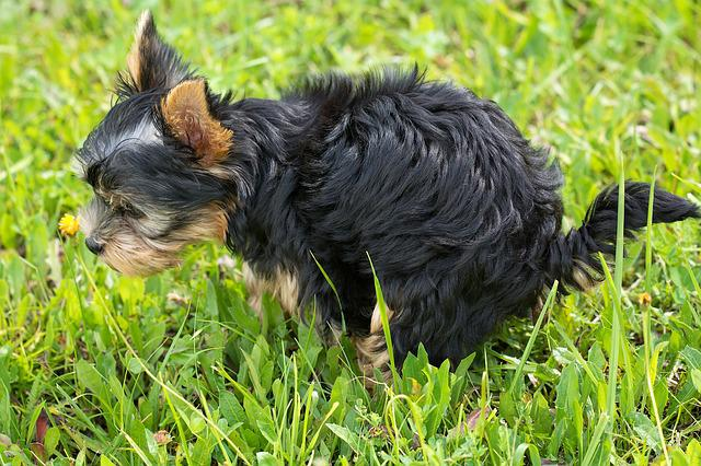 Dog, Puppy, Animal, Pet, Small Dog, Mammal, Breed-dog