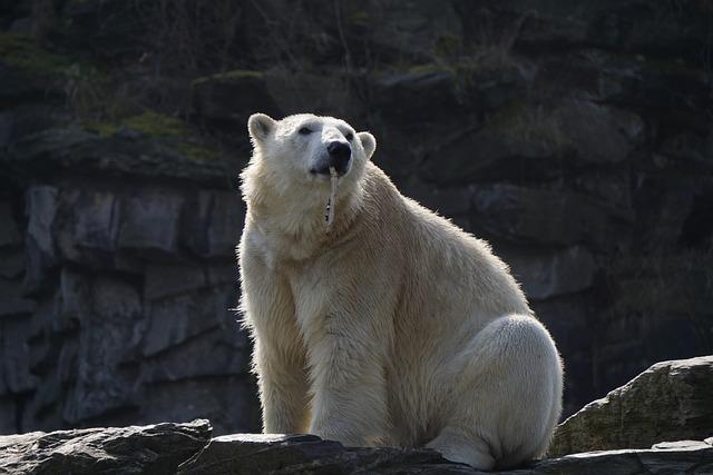 Polar Bear, Mammal, Animal World, Nature, Frosty, Polar