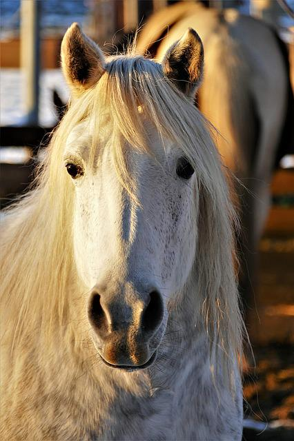 Horse, Portrait, Animal, Nature, Mammal