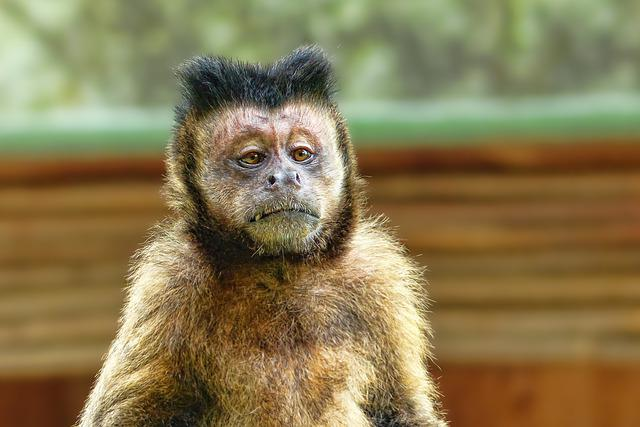 Animal World, Monkey, Animal, Portrait, Mammal, Primate
