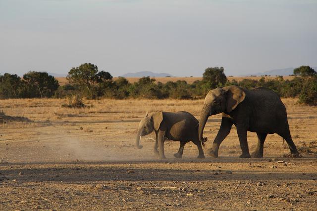 Mammal, Wildlife, Safari, Elephant, Animal, Savanna