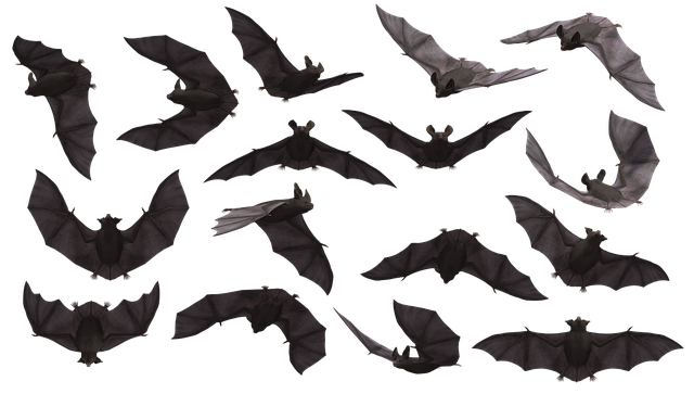 Bat, Bats, Flying, Mammal, Scary, Creepy, Eerie