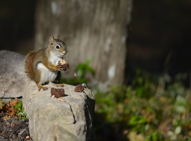 Wildlife, Nature, Mammal, Squirrel, Wood