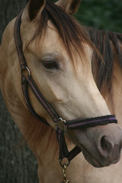 Horse, Equine, Animal, Stallion, Mammal, Farm, Portrait