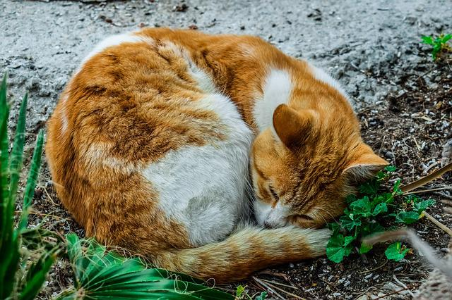 Cat, Stray, Sleeping, Animal, Nature, Mammal, Adorable
