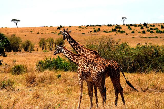 Wildlife, Africa, Tanzania, Mammal, Safari, Park