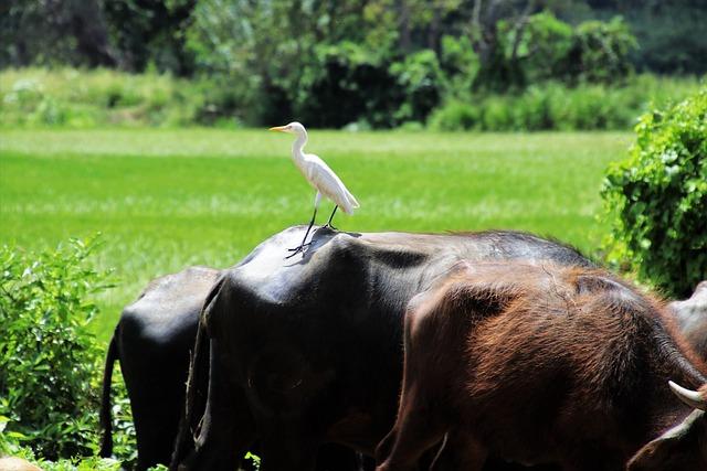 Heron, Nature, Grass, Animals, Mammals, Rural District