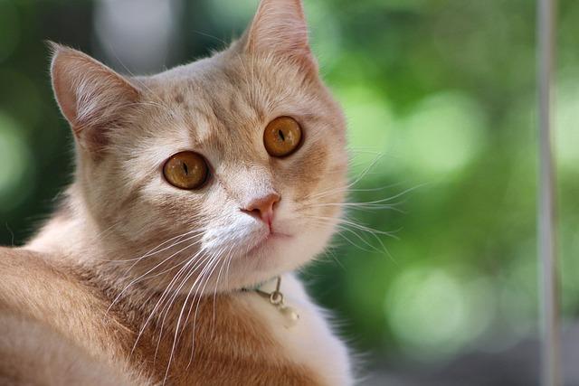 Animals, Cute, Cat, Mammals, Fur, Pet, Kitten, Furry