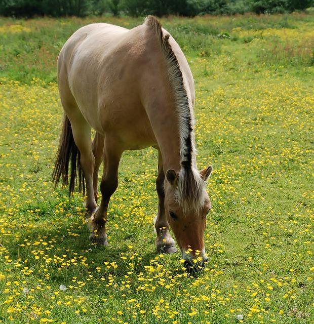 Mammals, Field, Animal Kingdom, Meadows, Meadow