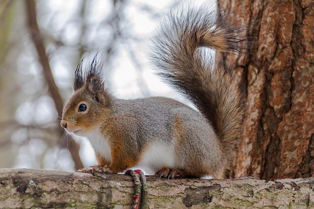 Squirrel, Mammals, Nature, Wild Animals