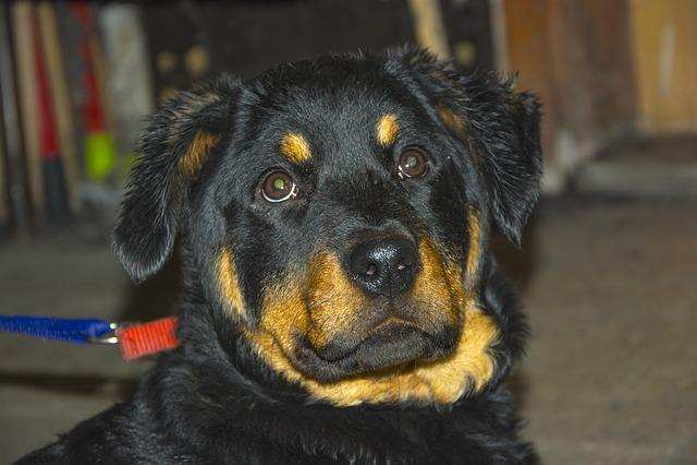 Dog, Mammals, Canine, Portrait, Pets, Animals, Puppy