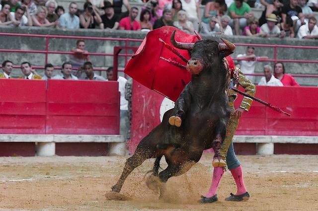 Toreador, Bullfight, Bulls, Black, Arenas, Man