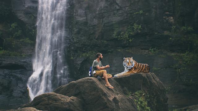 Tiger, Man, Predator, Big Cat, Dangerous, Carnivores