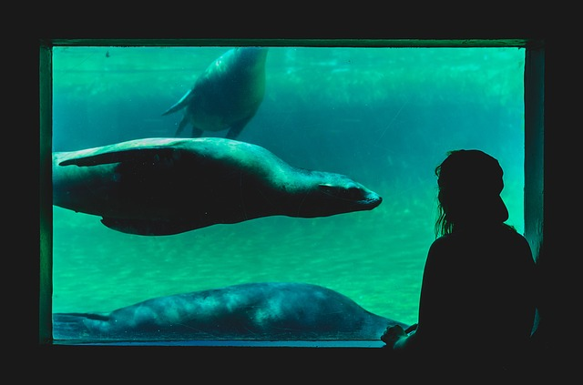 Underwater, Aquarium, Sea Lion, Water, Man, Guy, People