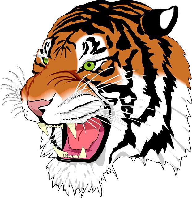 Sumatran Tiger, Tiger, Man-eater, Wildcat, Predator